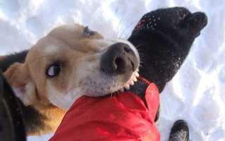 Первые симптомы бешенства после укуса собаки