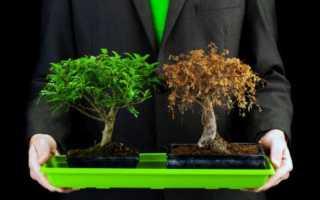 Влияние электромагнитного излучения различной частоты на растения и микроорганизмы
