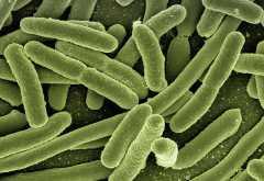При какой температуре погибают бактерии сальмонеллы