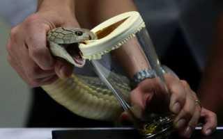 Применение змеиного яда