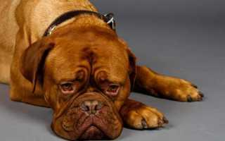 Первые признаки отравления у собак
