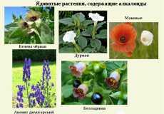 Алкалоиды в растениях: местонахождение и применение