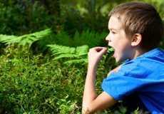 Первая помощь при отравлении растениями