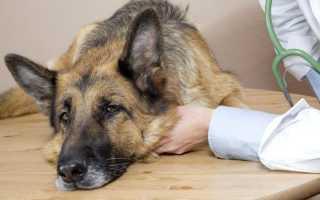 Симптомы и лечение пищевого отравления у собак
