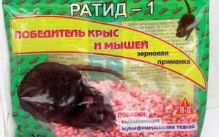 Опасный крысиный яд