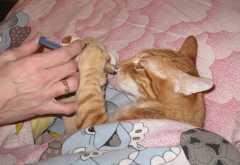 Что можно дать коту при отравлении