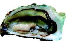 Симптомы и лечение отправления устрицами