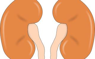Причины и способы устранения боли в почках после отравления
