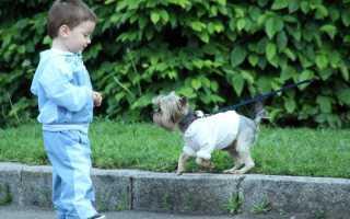 Что делать, если ребенка укусила собака?