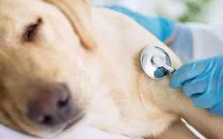 Первая помощь собакам при отравлении