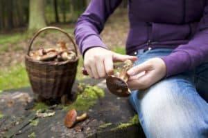 Использование в пищу червивых грибов