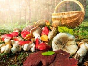 Разновидности грибов