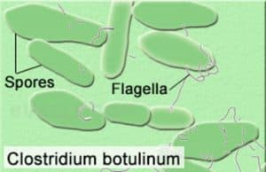 Микроб Clostridium botulinum