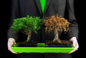 Влияние электромагнитного излучения на растения