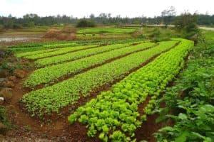 Урожайность растений