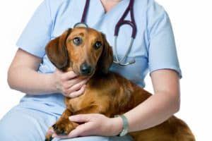 Ветеринар и собака