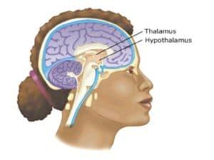 Кора больших полушарий головного мозга