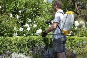 Обработка медным купоросом садовых участков