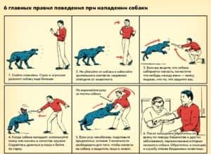 6 правил поведения при нападении собак