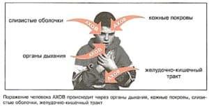 Пути проникновения опасных веществ в организм человека