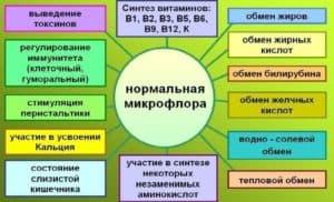 Функции ЖКТ при нормальной микрофлоре