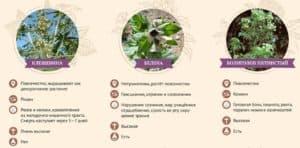 Симптомы отравления ядовитыми растениями