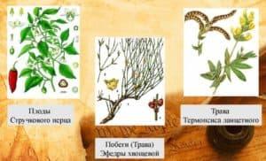 Растения, содержащие алкалоиды