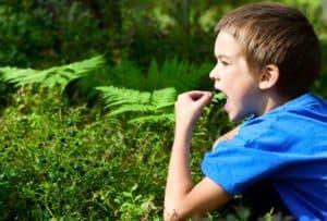 Употребление в пищу ядовитого растения