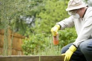 Обработка растений пестицидами