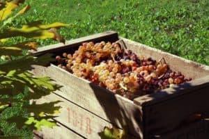 Виноград в деревянном ящике