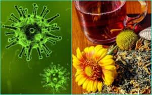 Вирусы и травяной чай