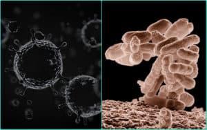 Вирусы и кишечная палочка