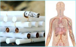 Сигареты и организм человека