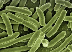 Бактерии сальмонеллы
